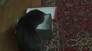 Кот и коробка(Кот и коробка Коты и кошки очень любят коробки,корзины. Мой кот Тимофей-мастер по взламыванию коробок...., 2015-05-17T14:59:54.000Z)