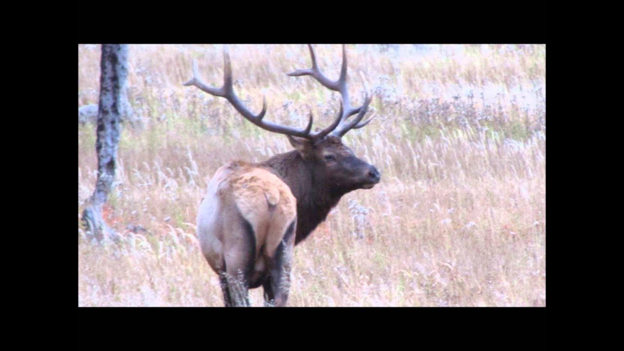 free elk bugle ring tone