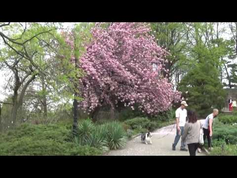 Fort Tryon and The Cloisters in New York   Part 1 -- Filmed on Saturday April 29 2017