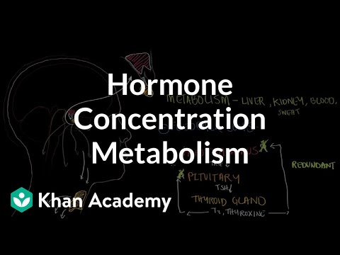 Hormone concentration metabolism and negative feedback | NCLEX-RN | Khan Academy