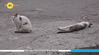Kedi, Köpek Tarafından Öldürülen Arkadaşı için Ağlıyor 4K UHD