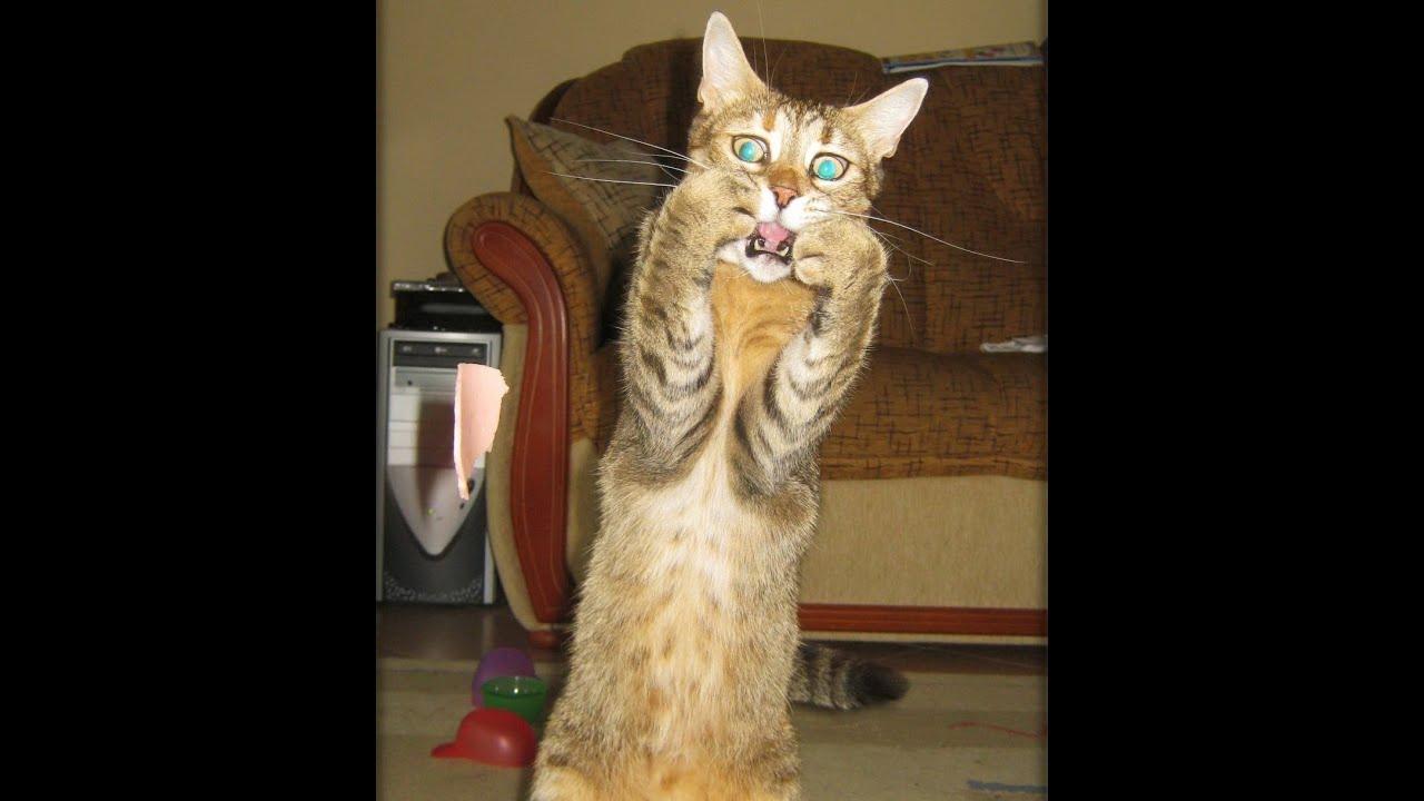 Фон для, прикольные картинки про кошек смешное до слез