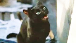 Street Trash (1987) - Official Trailer