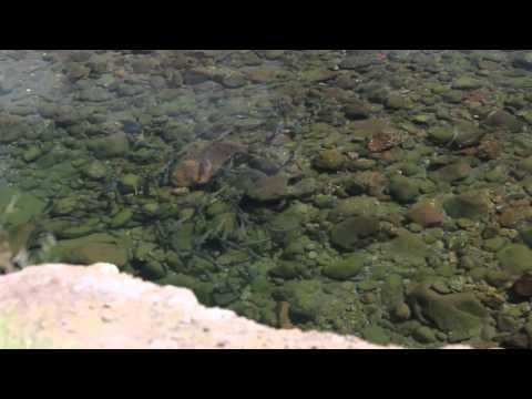 High & Dry - Yellowfishing In Lesotho