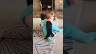 Funny Animals 🐶🦄🦋 Trolling Babies 👶 👧👦