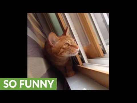Cat has crazy reaction to chirping birds outside