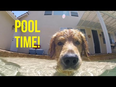 OSHIE LOVES THE POOL | Oshies World