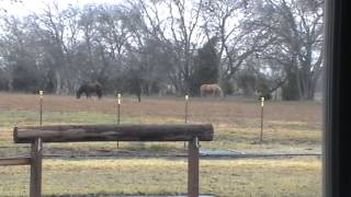 My Horse Stands in Rain Do I lock him up Stall & Blanket him to keep Dry & Warm - NO Dummy
