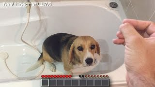 Real Life Minecraft - WASHING PUPPIES (Realistic Minecraft)