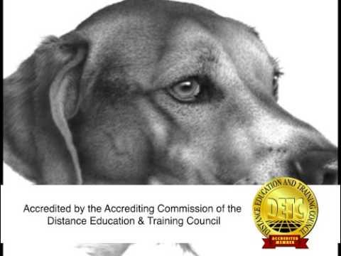 Art Instruction Schools - 2008 30 second commercial