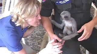 NAT GEO Cambodia Animal Rescue
