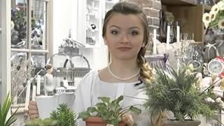 Как ухаживать за цветами и растениями в осенне-зимний период?