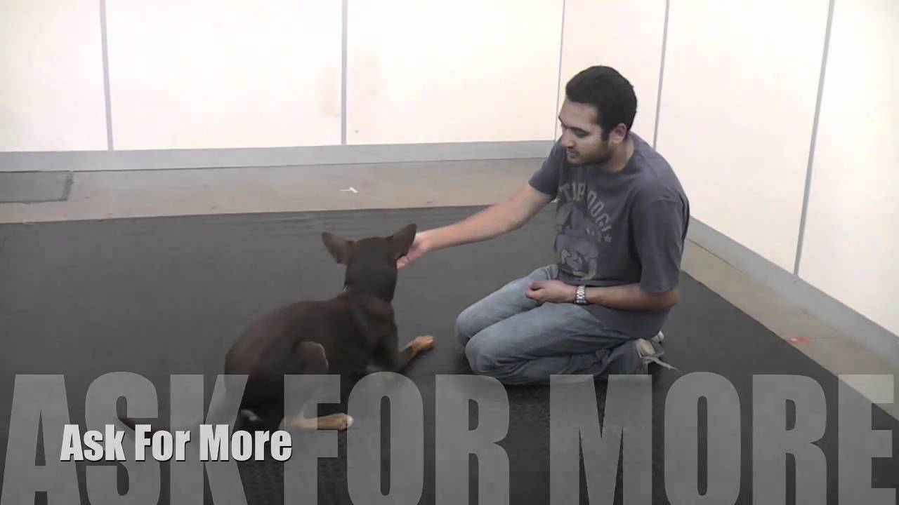 Teaching You Dog How To Sit Down And Stand On Cue Using Lure And Reward Training Youtube