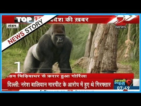Top 10 World News : A Gorilla escaped from the zoo in London, taken back by the expert team later