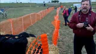 Jack Russell Terrier Races -- Fast Dogs