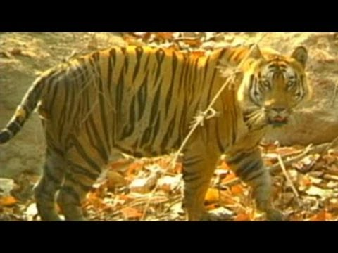 WWF meet on tiger conservation