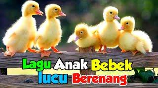 Download Lagu Anak Populer Bebek Berenang, Anak Ayam, Burung, Sapi, Kambing Dan Lainnya