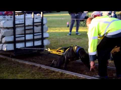 Final 4 Dogs Weight Pulling - 2 May 2015 South Africa