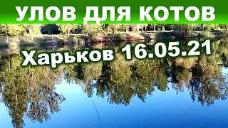 Рыбалка весной удочкой с берега в Харьковском гидропарке
