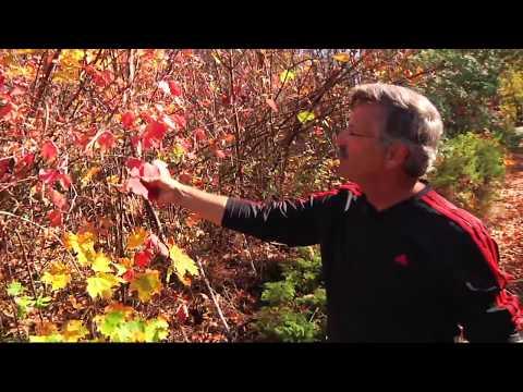 Best of Door County Fall Colors on the Door Peninsula