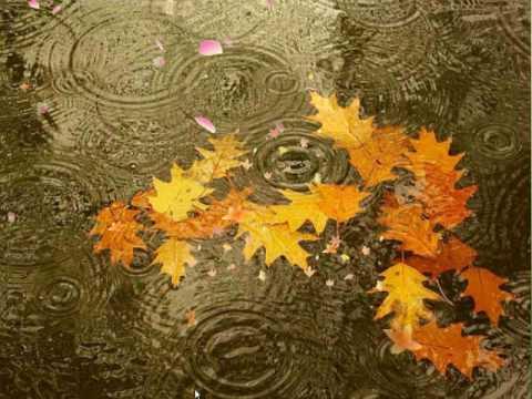 Imagini pentru frunze ruginii