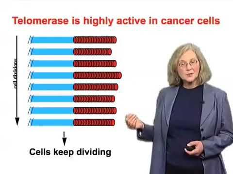 Elizabeth Blackburn (UCSF) Part 2: Stress, Telomeres and Telomerase in Humans