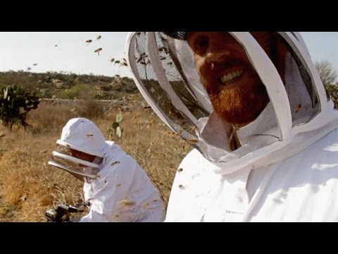 A Film Crew Unleashes 40,000 Killer Bees On Itself