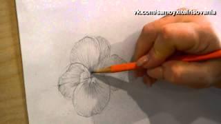 как нарисовать анютины глазки карандашом видео
