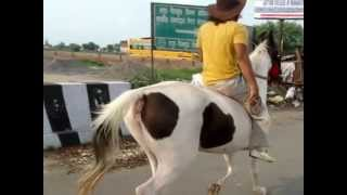 horse riding 2 gallop without saddle ( dehaati )