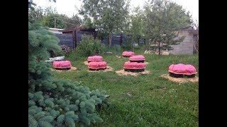 КАБАЧКИ И ТЫКВЫ В МЕШКАХ 2016. От.. и До.. How to grow vegetables  marrow in Bags. Start to Finish.