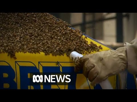 Bees take over New York hot dog stand