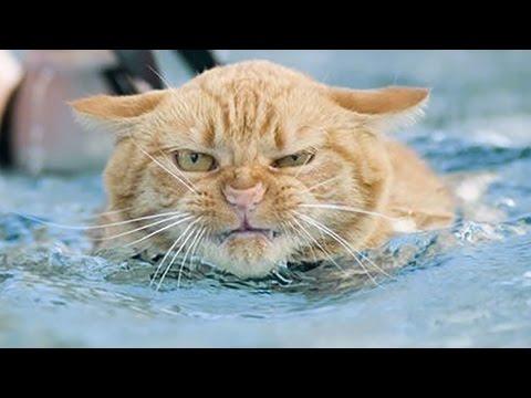 ☺ Professional diving cat ♒ /...