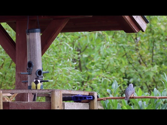 Singvögel im Garten 1