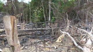 Tin Thời Sự Hôm nay (18h30 - 22/9/2017) : Rừng phòng hộ ở Quảng Ngãi 'kêu cứu'
