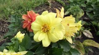 Какие летние цветы знаете  Which summer flowers know(Просто вышел в лес, а там такая красота. Сразу решил собрать ролик. Смотрите для души. Ставьте лайки. Подписы..., 2016-07-11T15:49:44.000Z)