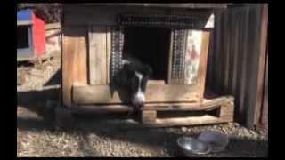 Ставропольский приют для  животных