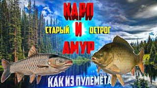 Русская Рыбалка 4 РР4 Старый Острог Карп и амур как из пулемёта