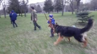 Собачьи бега