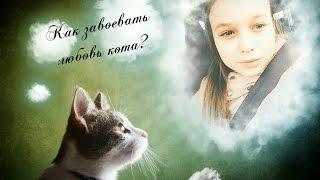 Как заставить или завоевать сердце кота? Как влюбить в себя котенка или кота.