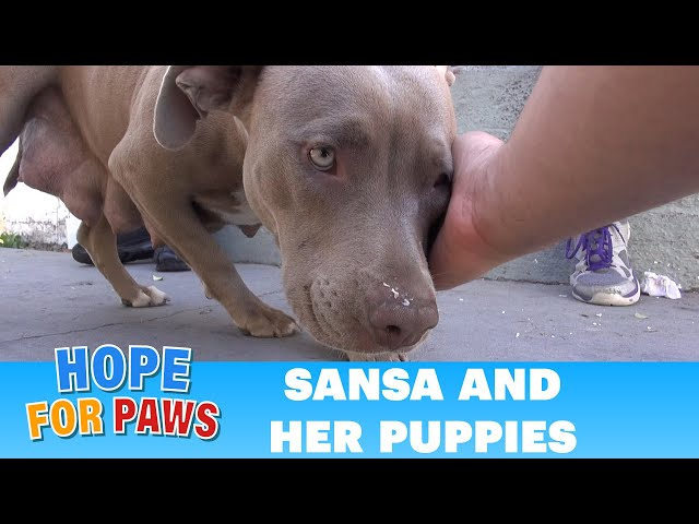 Hope For Paws: Rescuing a homeless family from under a house.  Please share  :-)