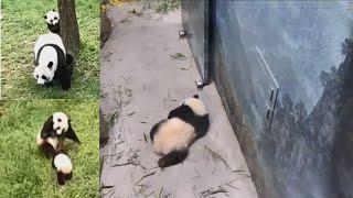 2021-04-16 Xiao Qi Ji ~ Paws Up For Furday