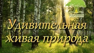 Yoga-Life / Удивительная живая природа. Прогулка по лесу :)