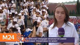 На Красной площади начинается самая массовая тренировка по боксу - Москва 24