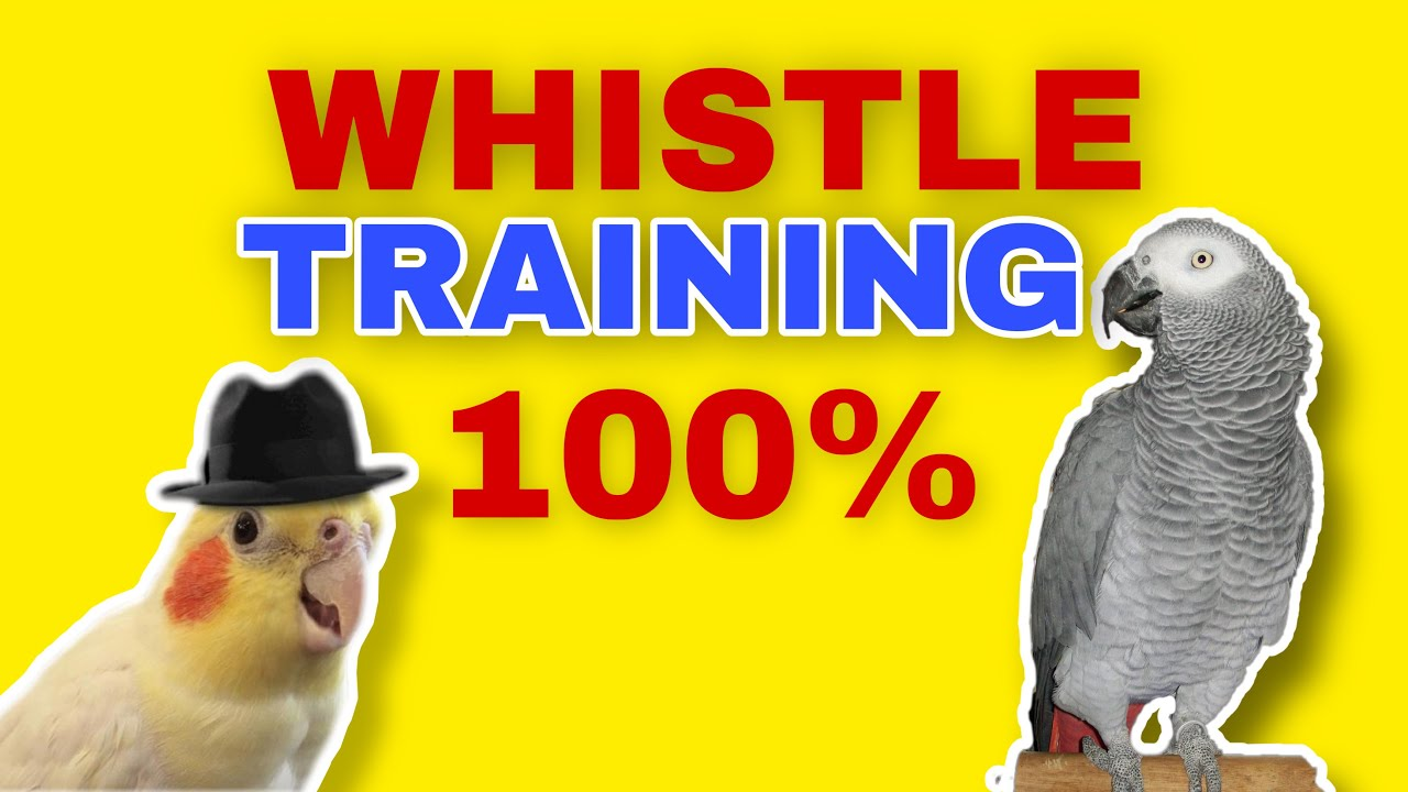TEACH YOUR PARROT TO WHISTLE