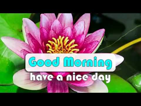 Good Morning Wishes Flowers Blooming Video Whatsapp Youtube