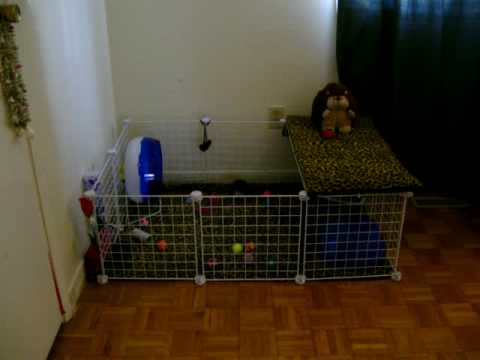 My hedgehog 39 s c c cage doovi for Cheap c c cages