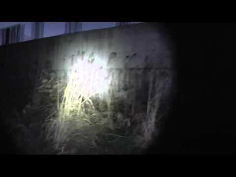 懐中電灯と一緒に散歩 JETBeam 3M PRO VP-L 屋外照射