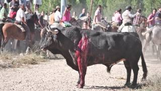 Blood Fiestas Spain | Animal Equality