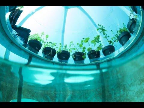 Uzgajanje biljaka pod vodom - Duur: 12:14.