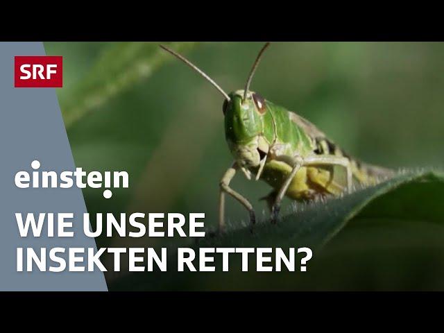 Das grosse Insektensterben – warum die kleinen Tierchen immer weniger werden | SRF Einstein